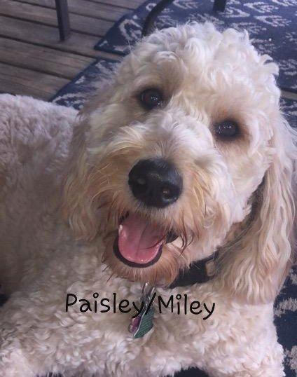 Paisley-Miley