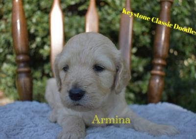 """Armina """"Macy"""""""