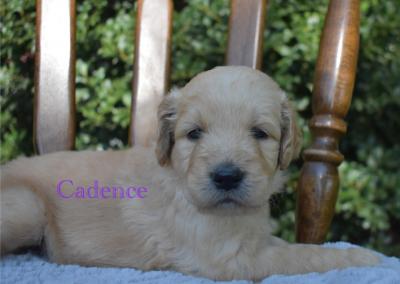 """Cadence """"Cadie"""""""