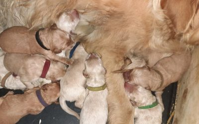 Lola's puppies have arrived!